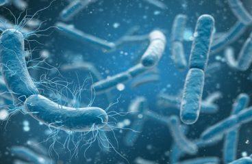 Pentingnya Penelitian Ekologi Mikroorganisme Bagi Kesehatan
